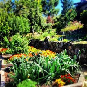Vegan Organic Garden
